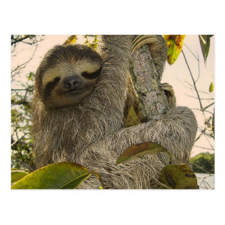 Fantastischer Sloth Postkarte