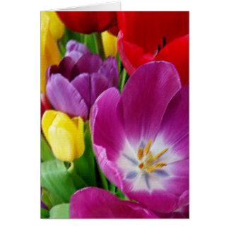 Farben der Tulpen Karte