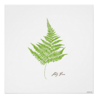 Farn-botanischer Druck Damen-Farn Illustrations-| Poster