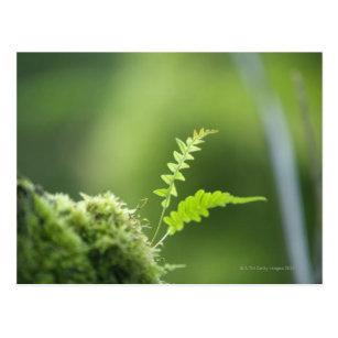 Farn im Regenwaldclsoe oben Postkarte