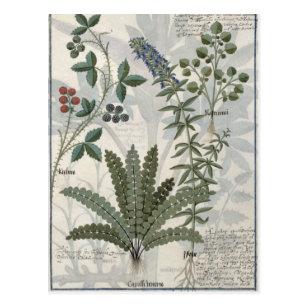 Farne, Brombeersträucher und Blumen Postkarte