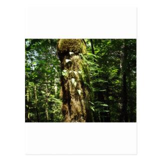Farne im Wald Postkarte