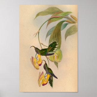 Faucille 1861 d'impression de colibri de cru poster