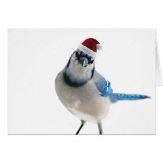 Feiertags-Blau-Jay Karte