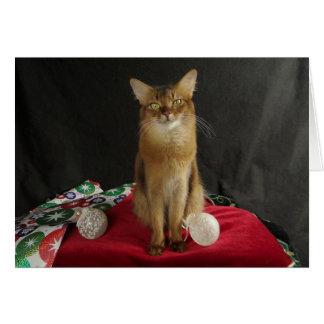 Feiertags-somalische Katze, Sommer-Samba Karte