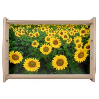 Feld der gelben Sonnenblume-Blumen Serviertabletts