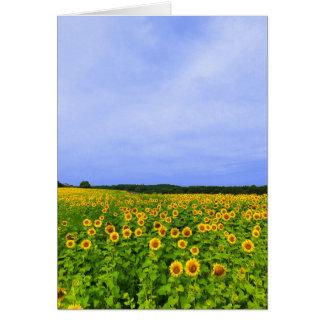 Feld der Sonnenblumen Karte