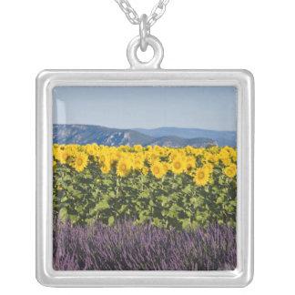 Feld der Sonnenblumen und der Lavendel-Blumen, Versilberte Kette