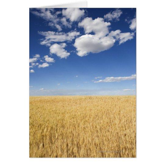 Feld des Weizens Karte
