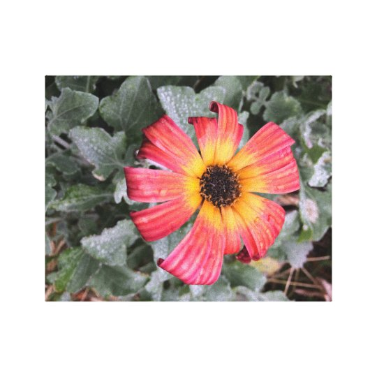 Feuerfarbige Blume Leinwanddruck