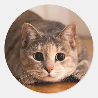 Feuille espiègle de chat d'autocollants sticker rond