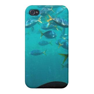 Fische des Riff iPhone 5 Falles iPhone 4 Hülle