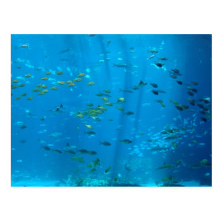 Fische Postkarte