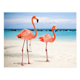 Flamingos at the beach postkarte