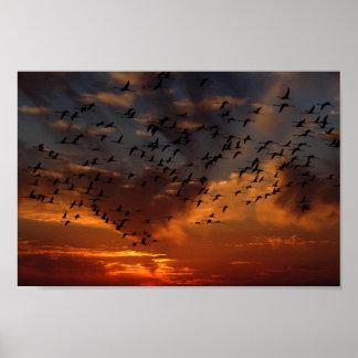 Flamingos, die an Sonnenuntergang Plakat fliegen