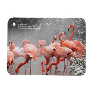 Flamingos Smithsonian | im Schnee Magnet