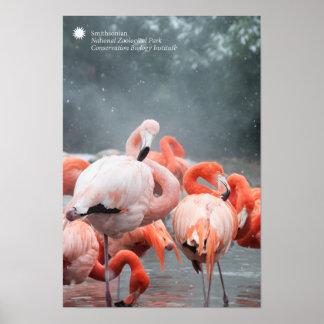 Flamingos Smithsonian | im Schnee Poster