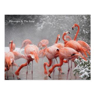 Flamingos Smithsonian | im Schnee Postkarte