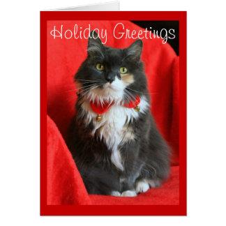 Flaumige Katzen-tragender Weihnachtskragen - Karte