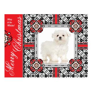 Flaumiger kleiner Hund wünscht Ihnen ein weißes Postkarte