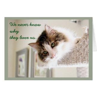 Flaumiges Katzen-Gesichts-Beileid Grußkarte
