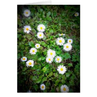 Flecken der Gänseblümchen, leer Karte