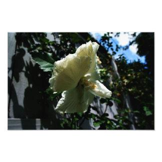 Fleur accrochante photographie