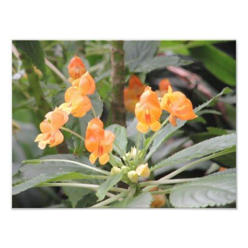 fleur photo d'art