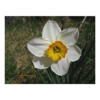 Fleur Photos Sur Toile
