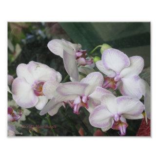 Fleur Tirage Photo