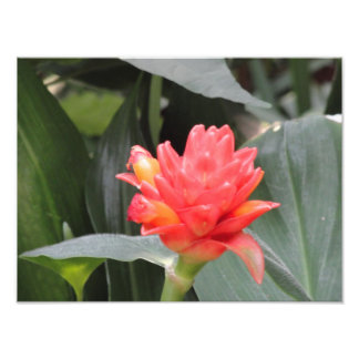 fleur photographies d'art