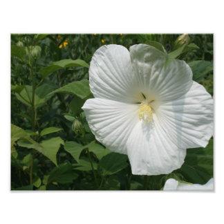 fleur blanche photo d'art