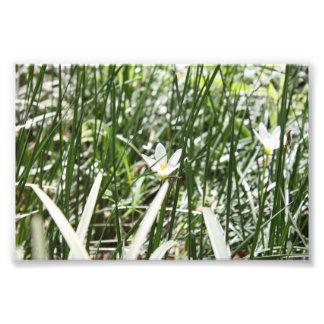 Fleur blanche photographie d'art
