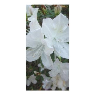 Fleur blanche modèle pour photocarte