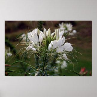Fleur blanche d'impression de toile poster