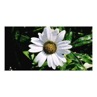 fleur blanche simple photocartes personnalisées
