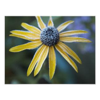 Fleur d hiver photos sur toile