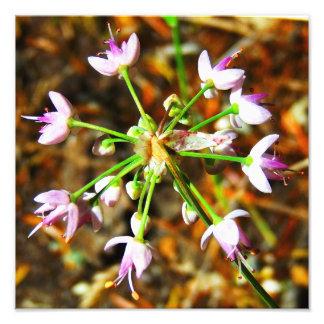 Fleur d'ail sauvage impressions photographiques