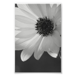 Fleur dans B W Impression Photographique