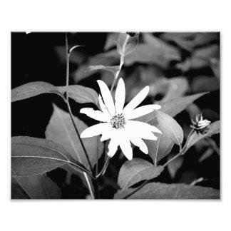 Fleur de B&W Impressions Photo