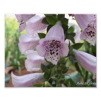 Fleur de digitale photo d'art