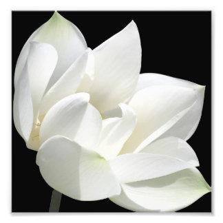 Fleur de floraison tirages photo