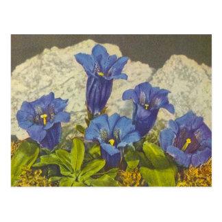Fleur de gentiane cartes postales