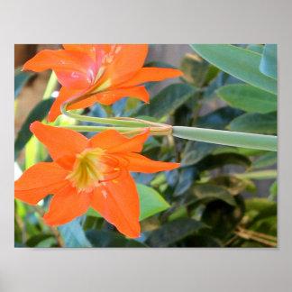Fleur de l'Lis rouge Poster