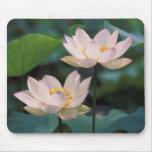 Fleur de Lotus dans la fleur, Chine Tapis De Souris
