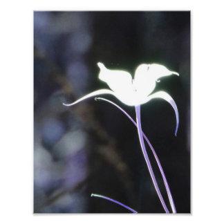 Fleur de lumière du soleil tirages photo