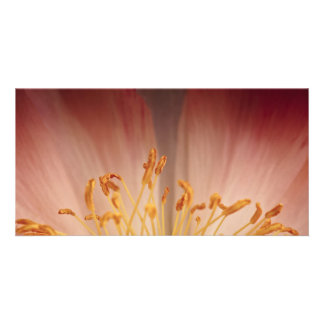 Fleur de pivoine photocarte