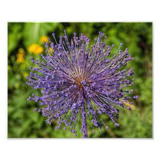 Fleur de pourpre de transitoire photo sur toile