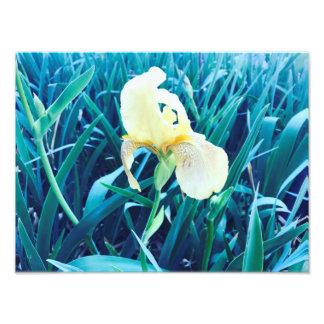 Fleur de ressort photographie d'art