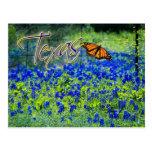 Fleur d'état du Texas - Bluebonnets Carte Postale